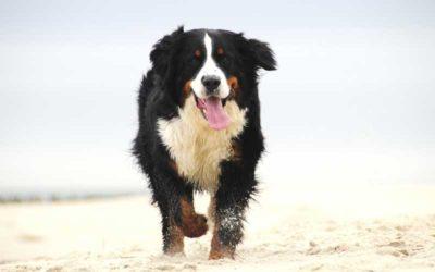 benner senner op het strand