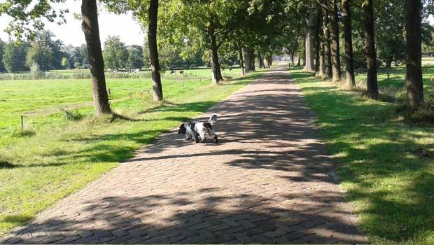 Aan de wandel!  8 leuke sites vol wandelingen met hond