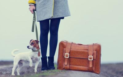 checklist vakantie met hond