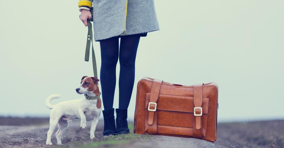 Checklist 'op vakantie met hond'