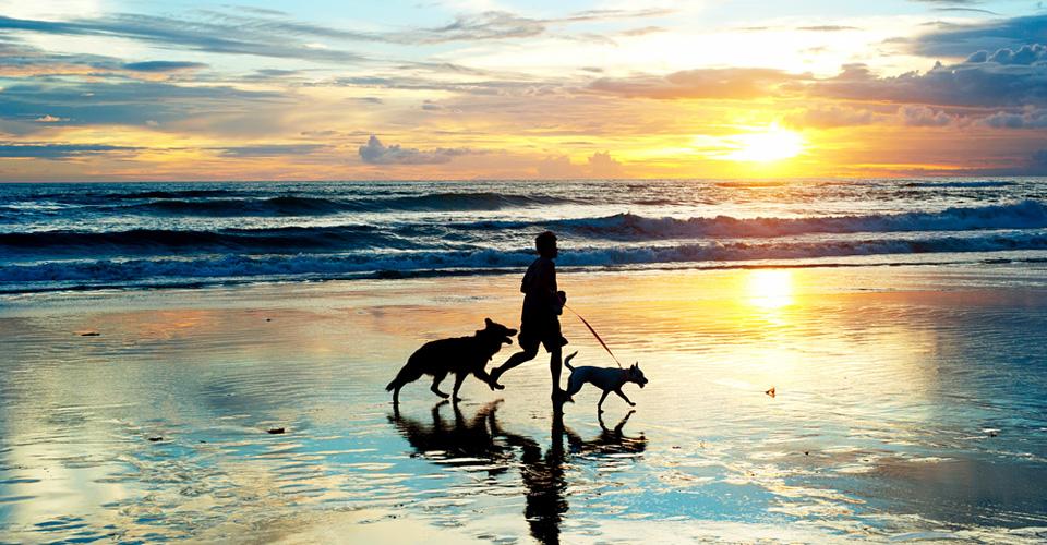 Met 't doggie op strandvakantie