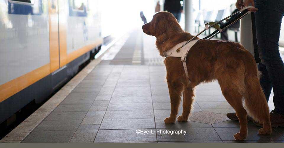 Met een blindengeleidehond door hartje Amsterdam