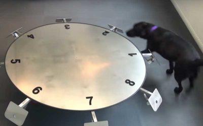 kngf-medische-detectiehonden