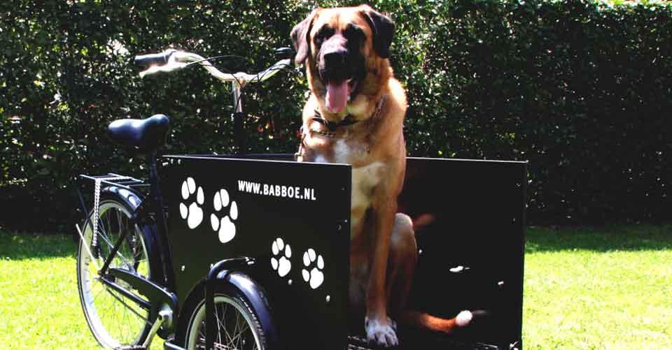 Bakfiets voor je hond