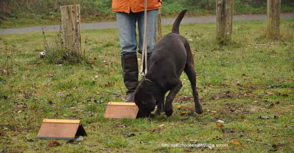 SITO-toets voor honden
