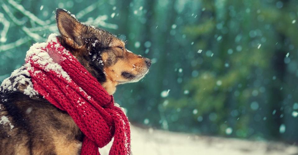 DIY adventskalender voor je hond