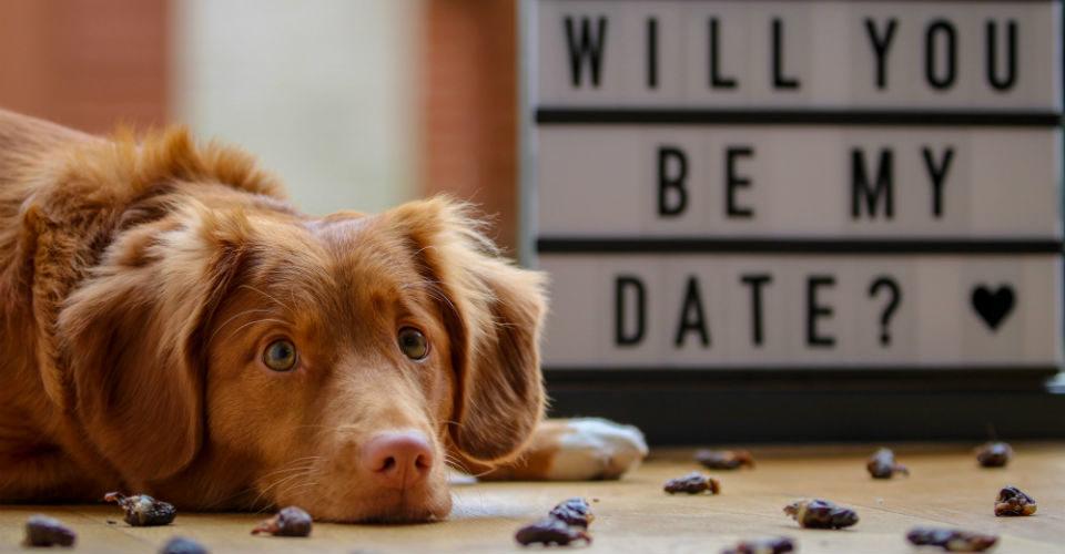 Valentijnsdag voor je hond, 7 tips