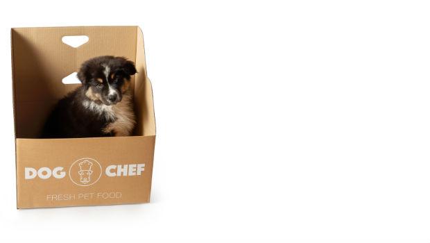 Rox in een doos van Dog Chef
