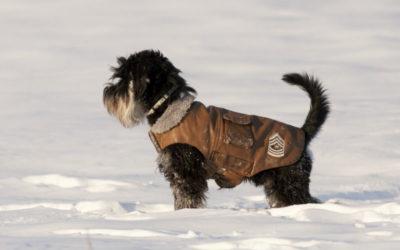 hond met jasje aan in de sneeuw