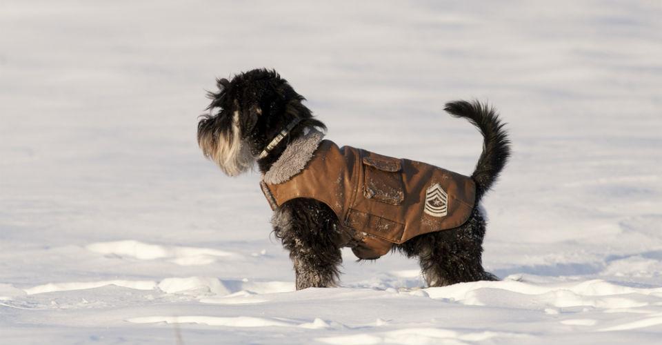 Wintertips van de dierenfysiotherapeut!