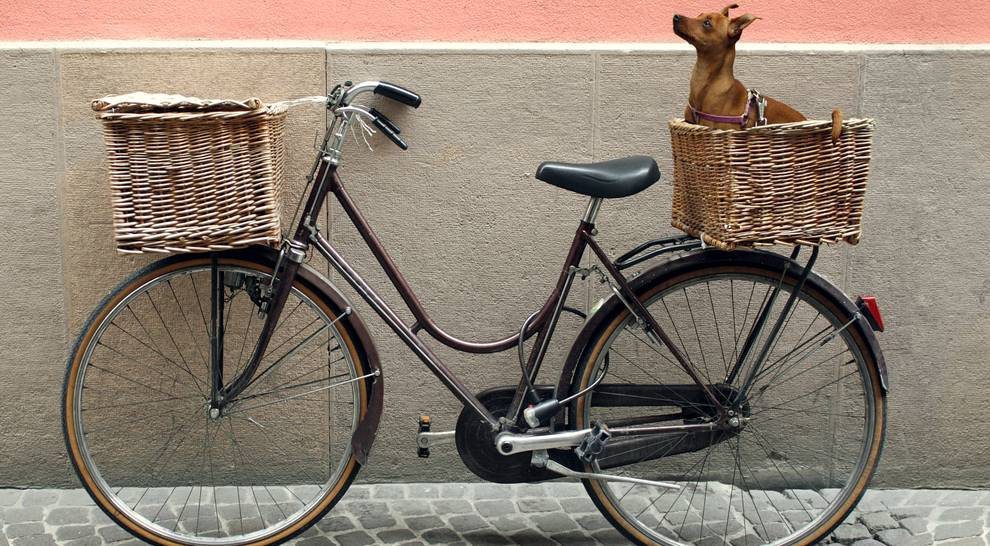 Hond mee op de fiets? Zo doe je dat
