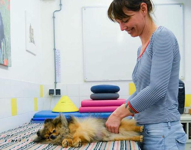 Het belang en waarom van hondenmassage