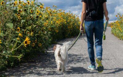 checklist op vakantie met hond