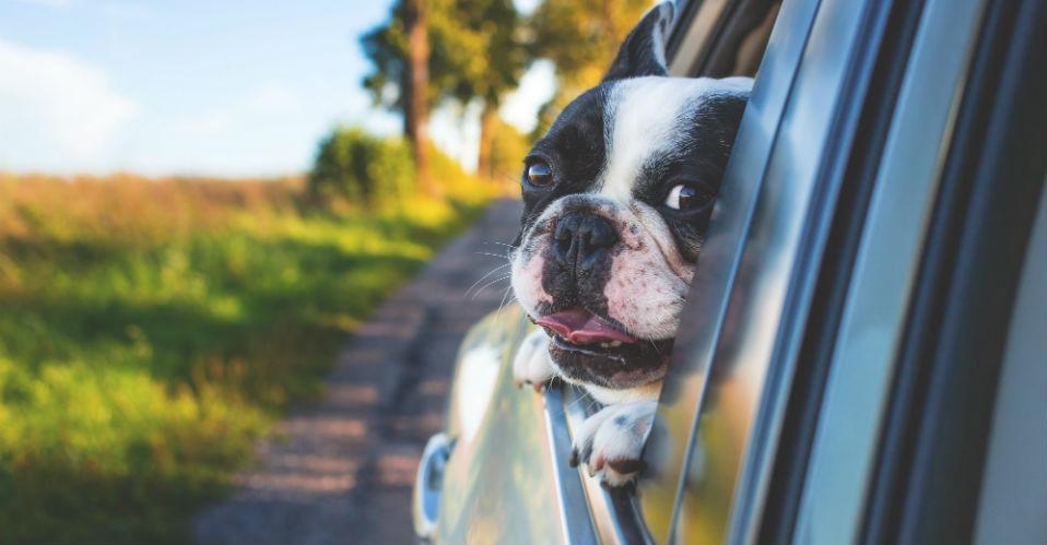 Met de auto op vakantie, hond mee
