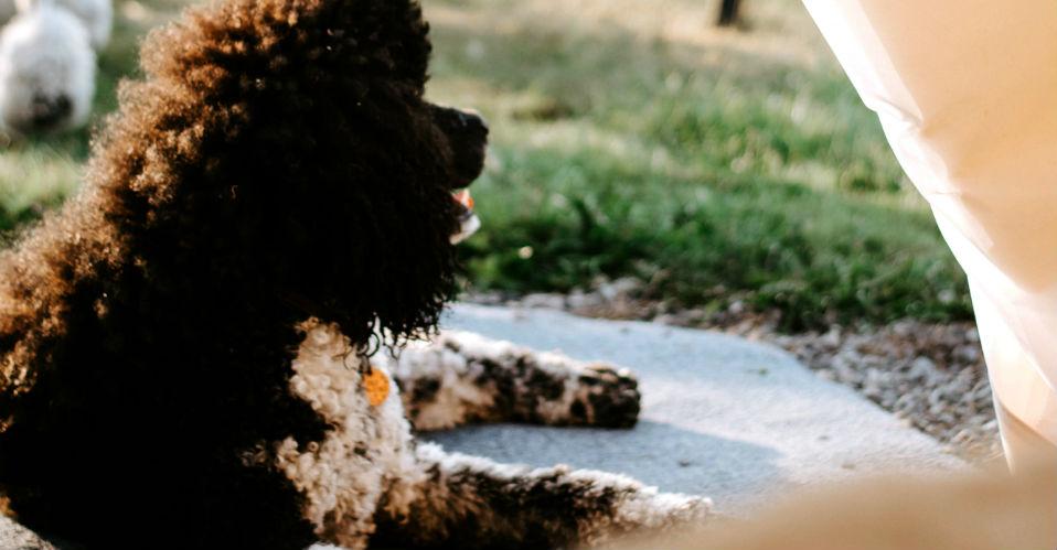Op de camping, met hond