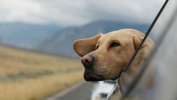 vakantie met hond - onderweg in de auto